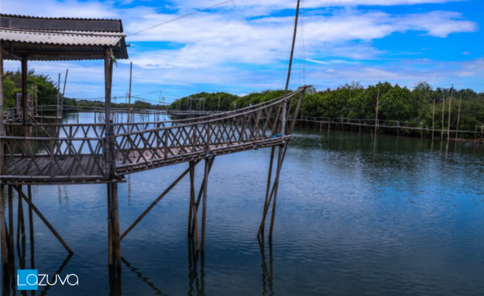 hutan-mangrove-wana-tirta