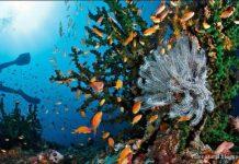 wisata sabang aceh pulau rubiah surga taman bawah laut