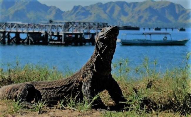 Tempat Wisata Indonesia Pulau Komodo