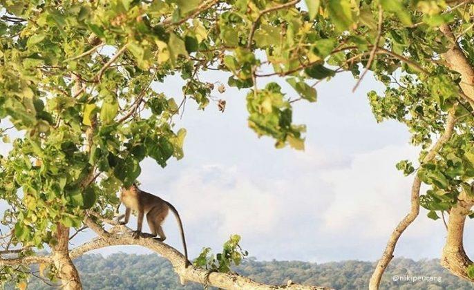 taman nasional ujung kulon wisata banten