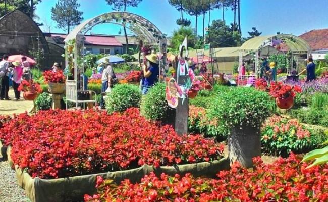 wisata kebun bunga begonia lembang bandung