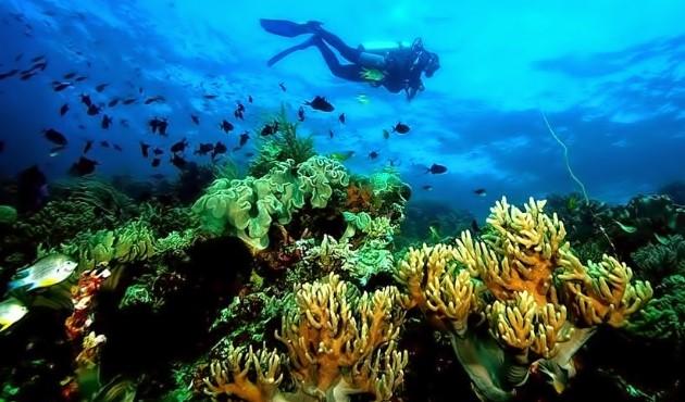 wakatobi tempat wisata indonesia