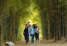 Hutan Bambu Keputih surabaya