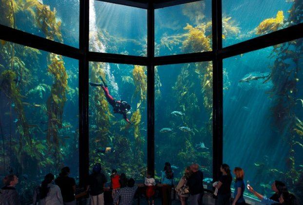 Ini Dia 3 Jenis Kaca Yang Baik Untuk Aquarium Lazuva Com Tempat Wisata Indonesia Pariwisata Indonesia