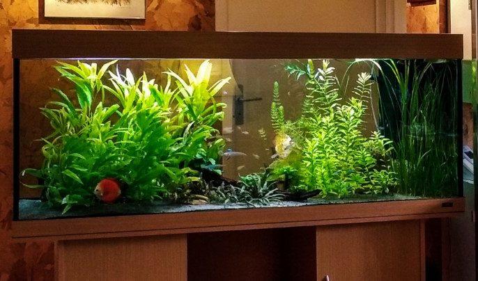 Jenis Kaca yang Baik Untuk Aquarium