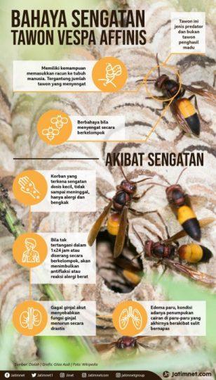infografis cara mengusir tawon vespa affinis-jatimnet[dot]com