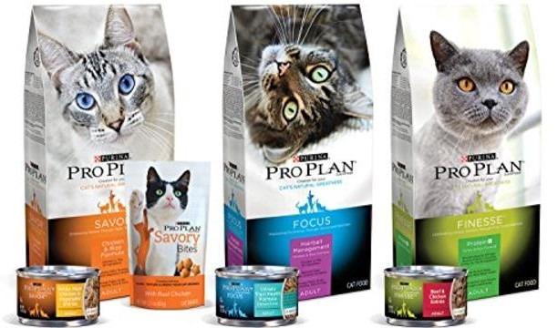 Proplan Adult dan Kitten makanan kucing persia