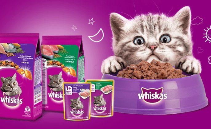 makanan kucing persia yang bagus whiskas