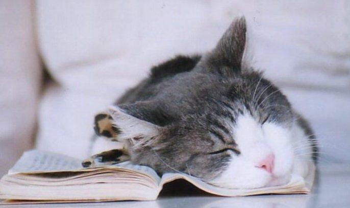 penyebab kucing tiba-tiba diam dan lemas