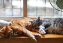 penyebab kucing tidur terus dan lemas