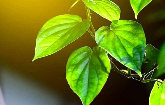 semprotan air lemon mengusir semut dalam islam