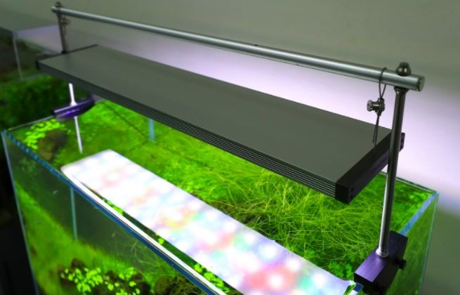 mempercantik aquarium - persiapan aquarium arwana