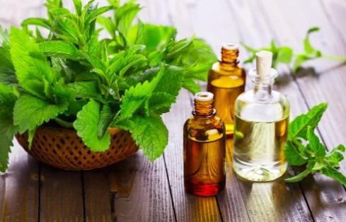 minyak peppermint tips mengusir semut dalam islam