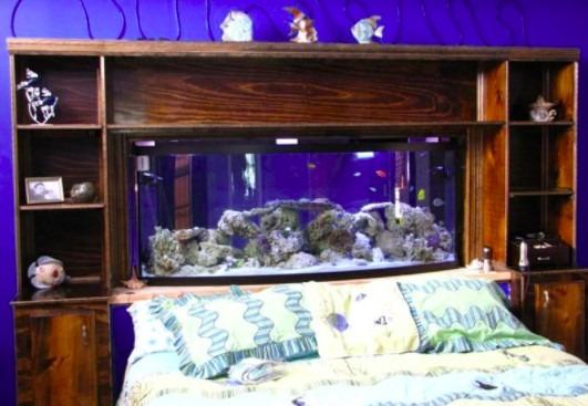 persiapan penempatan aquarium untuk arwana